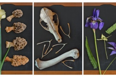 a triptych depicting high resolution varying imagery of natural flora and decay in each panel.