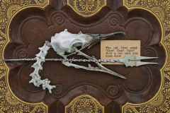 """A closeup vignette of a bird skull and vertebrae with a special twisted silver fork atop a leather décor. A card in the frame states """" the old bird cried : Caw! Caw! Caw! Now a red card you must draw"""""""