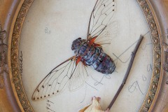 a closeup vignette of a dead cicada specimen with outstretched wings and dried rose within an ornate wooden frame.