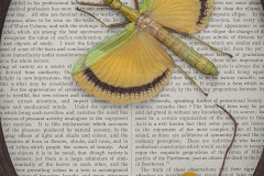 """a close up vignette of a yellow winged bug and yellow drying berries atop a page titled """"the art journal"""""""