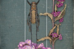 a closeup vignette of another dead beetle specimen and purple dried flowers within a frame