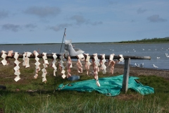 Beluga whale traditionally being processed