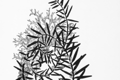 maggienowinskLarge black and white drawing exploring invented specimen forms. Coral like structure swirls among bamboo like leaves and barnacle-like forms. i_05