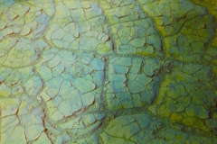 digital photograph of the hardened and cracked floor of the desert landscape