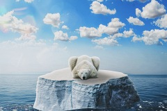 An environmental oriented poster with an image of a polar bear floating on a small piece of ice in water. Information at the bottom details how the burning of fossil fuels is contributing to melting sea ice and putting these animals at risk of extinction.