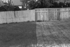 A photo taken standing on the line of two properties, the composition is divided by two different shades of grass and different fences beyond the grass meet in the middle.