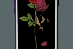 A cracked screen on a phone with picture of a ½ decaying rose on the screen.