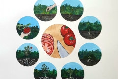 Circles depicting the growing of tomato.