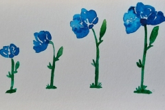 The growth of a blue flower in a timeline.