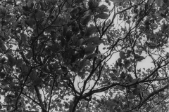 black and white image of the underside of leaves.